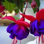 صور زهور , اروع صور الورد