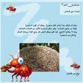معلومات عن النمل , ما هو شكل النملة