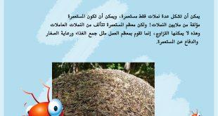 صورة معلومات عن النمل , ما هو شكل النملة