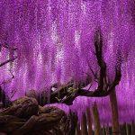 صور اشجار , شاهد اجمل 14 شجرة حول العالم