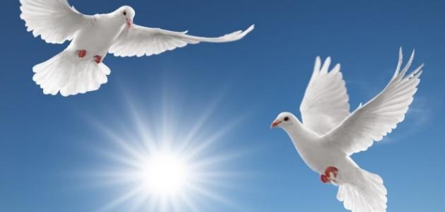 صور صور عن السلام , صور جميلة معبرة عن السلام