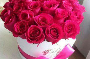 صورة احلى صور ورد , مش هتلاقي احلى من الورد هدية