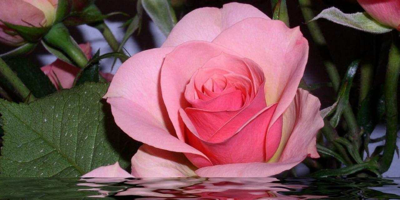 صورة صور اجمل الورد , ارق باقات محملة بشذى الزهور 13024 1