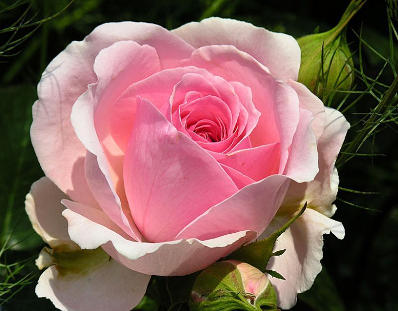 صورة صور اجمل الورد , ارق باقات محملة بشذى الزهور 13024 2