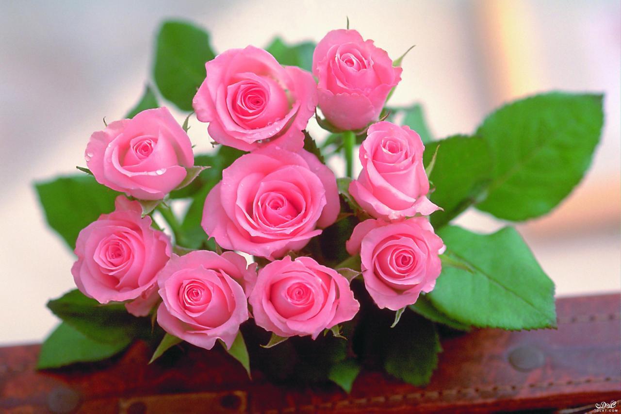 صورة صور اجمل الورد , ارق باقات محملة بشذى الزهور 13024 7