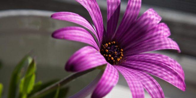 صور خواطر عن زهرة البنفسج , كلمات غيرت حياتى بلون البنفسج