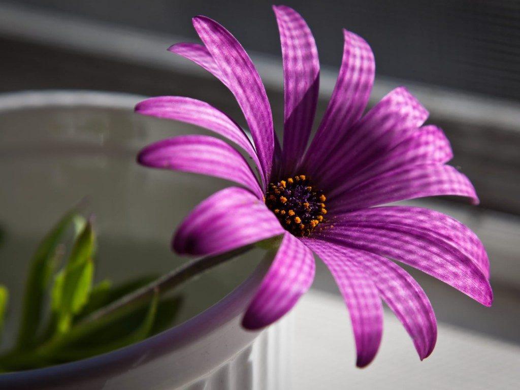 صورة خواطر عن زهرة البنفسج , كلمات غيرت حياتى بلون البنفسج