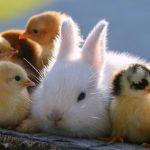 صور حيوانات مضحكة جدا 2019 , اجمل مواقف وطرائف لحيوانات تموت من الضحك