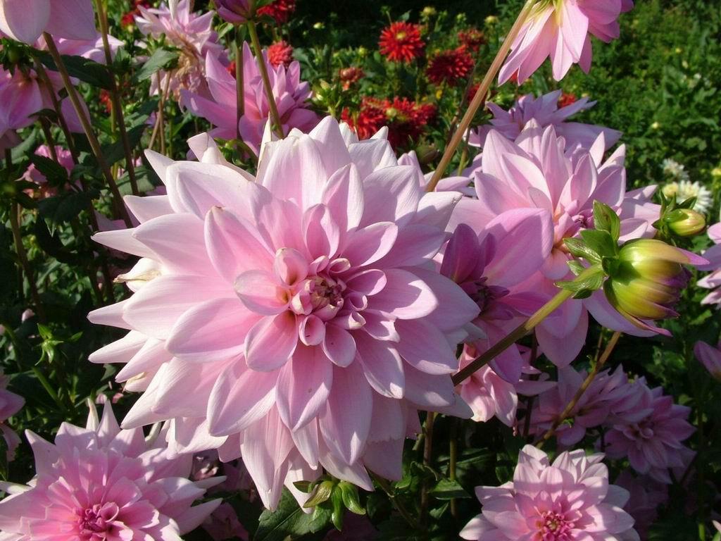 صورة اسماء الورود العربية , تعرف على الورد باشكاله واسمائه بالصور 13020 2