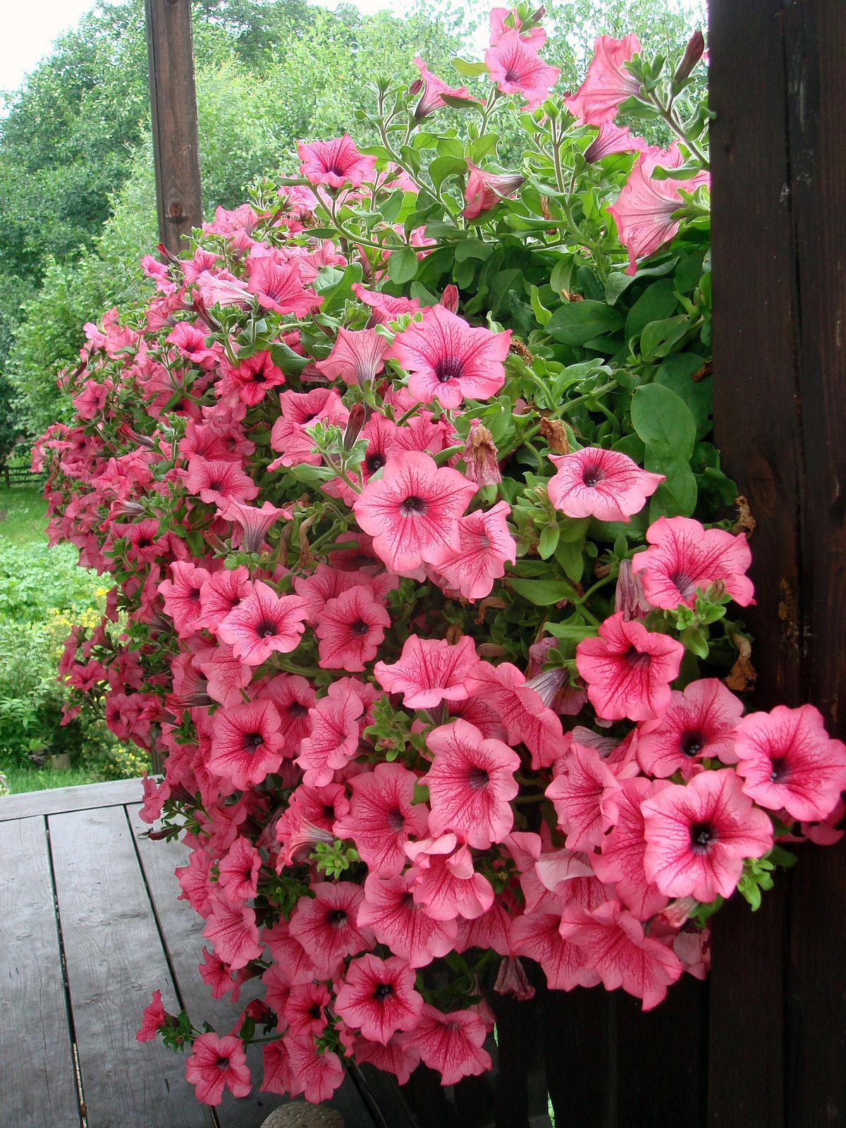 صورة اسماء الورود العربية , تعرف على الورد باشكاله واسمائه بالصور 13020 7