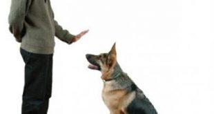 صورة كيفية تدريب الكلاب , طرق لتدريب كلبك