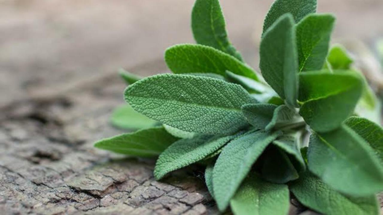 صورة فوائد المرمية , المميزات الصحية لعشبة المرمية