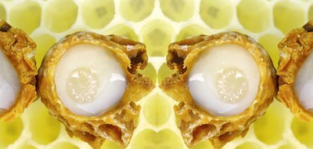 صورة فوائد غذاء ملكات النحل , ماهى مزايا غذاء ملكات النحل