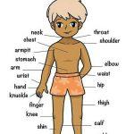 صور جسم الانسان , اجهزة جسد الانسان مصورة