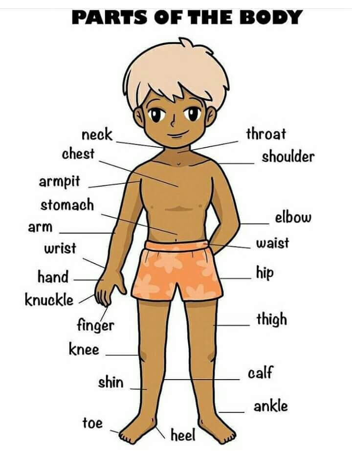 صورة صور جسم الانسان , اجهزة جسد الانسان مصورة