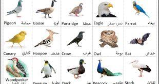 صور اسماء الطيور جميعها , عالم الطيور واسماؤها