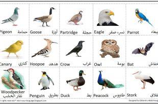 صورة اسماء الطيور جميعها , عالم الطيور واسماؤها