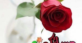 صور صور مساء الورد , اجمل الامسيات المعطرة