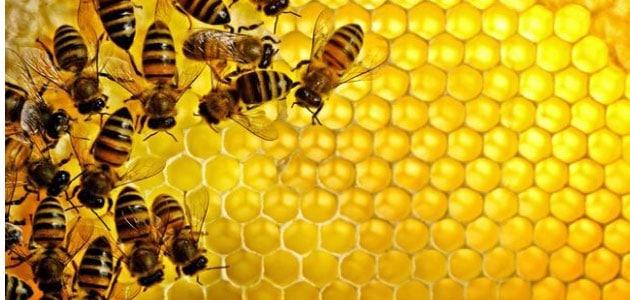 صورة تفسير حلم قرصة النحلة , لدغة النحلة للذكر والانثى في المنام