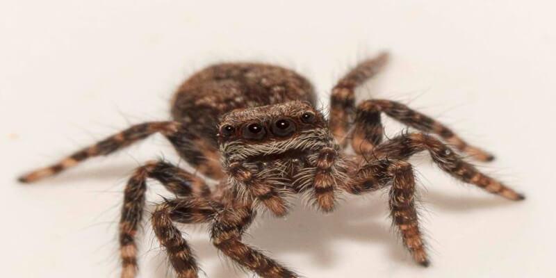 صورة تفسير رؤية العنكبوت في المنام لابن سيرين , حلمت اني ارى عنكبوت في المنام