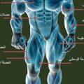 تمارين كمال اجسام , احصل على عضلات قوية و بارزة