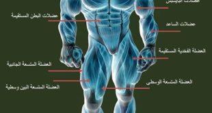 صورة تمارين كمال اجسام , احصل على عضلات قوية و بارزة