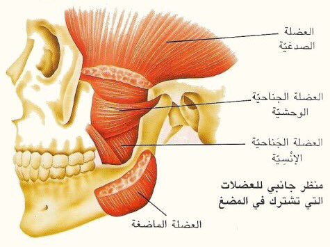 صورة اقوى عضلة في الجسم , العضلات نسبيه تختلف من شخص لاخر