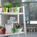 تنسيق نباتات الزينة في المنزل , دلعي بيتك بالورد وخليه جنه
