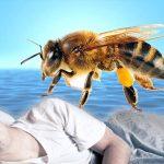 تفسير رؤية النحل في المنام , النحل رمز النشاط والشفاء من المرض