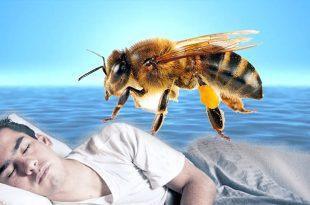 صورة تفسير رؤية النحل في المنام , النحل رمز النشاط والشفاء من المرض