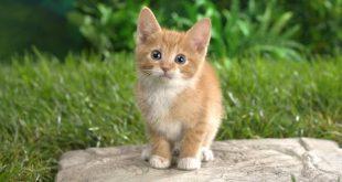 صورة صور حيوانات اليفه , اجمل صور للحيوانات الاليفة في المنزل