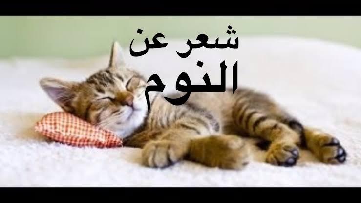 صورة صور عن النوم , صور وعبارات كيوت عن النوم