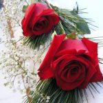 صور ورد حلوه , خلفيات جميلة لعشاق الورد