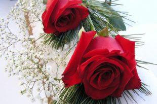 صورة صور ورد حلوه , خلفيات جميلة لعشاق الورد