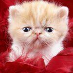 اجمل صور قطط , خلفيات روعة لاشكال القطط الجميلة