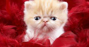 صورة اجمل صور قطط , خلفيات روعة لاشكال القطط الجميلة