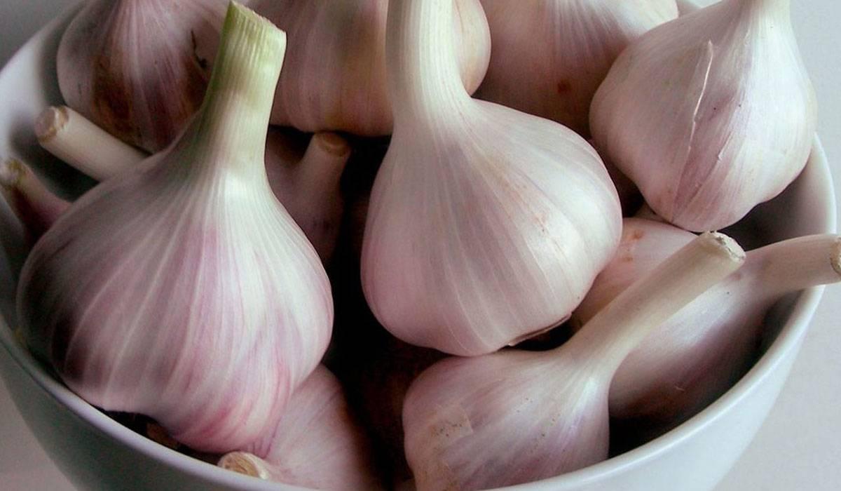صورة فوائد اكل الثوم , معالجة بعض الامراض بتناول اكل الثوم