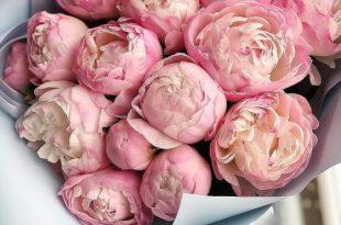 صورة خلفيات زهور , خلفيات الزهور المذهذة جدا بألوانها الرهيبة