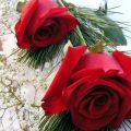 صور ورد رومانسيه , اجمل صور الورود الجميلة جدا 👇