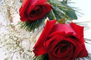 صورة صور ورد رومانسيه , اجمل صور الورود الجميلة جدا 👇