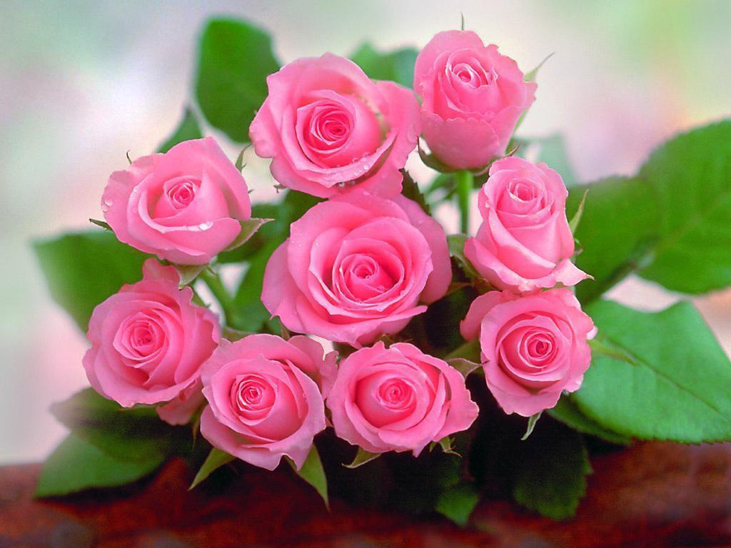 صورة صور ورد رومانسيه , اجمل صور الورود الجميلة جدا 👇 6553 2