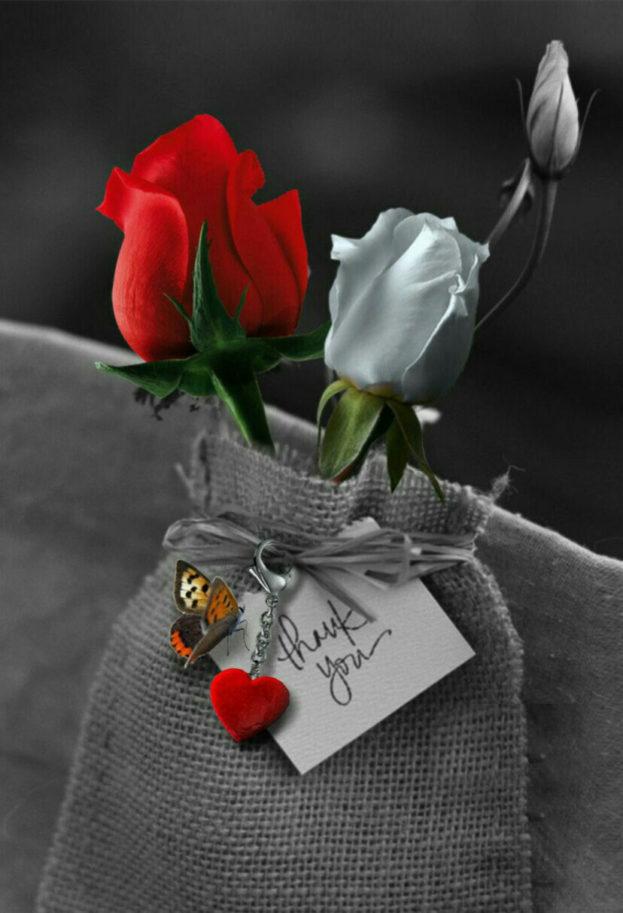 صورة صور ورد رومانسيه , اجمل صور الورود الجميلة جدا 👇 6553 5
