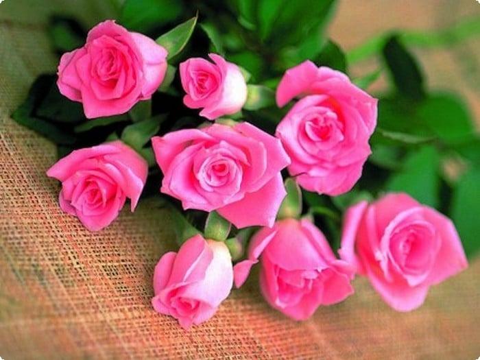 صورة صور ورد رومانسيه , اجمل صور الورود الجميلة جدا 👇 6553 9