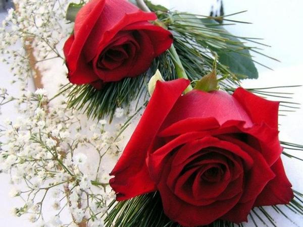 صورة صور ورد رومانسيه , اجمل صور الورود الجميلة جدا 👇 6553