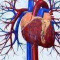 لو بتشتكي من الام في القلب ادخل شوووف العلاج المناسب , علاج مرض القلب