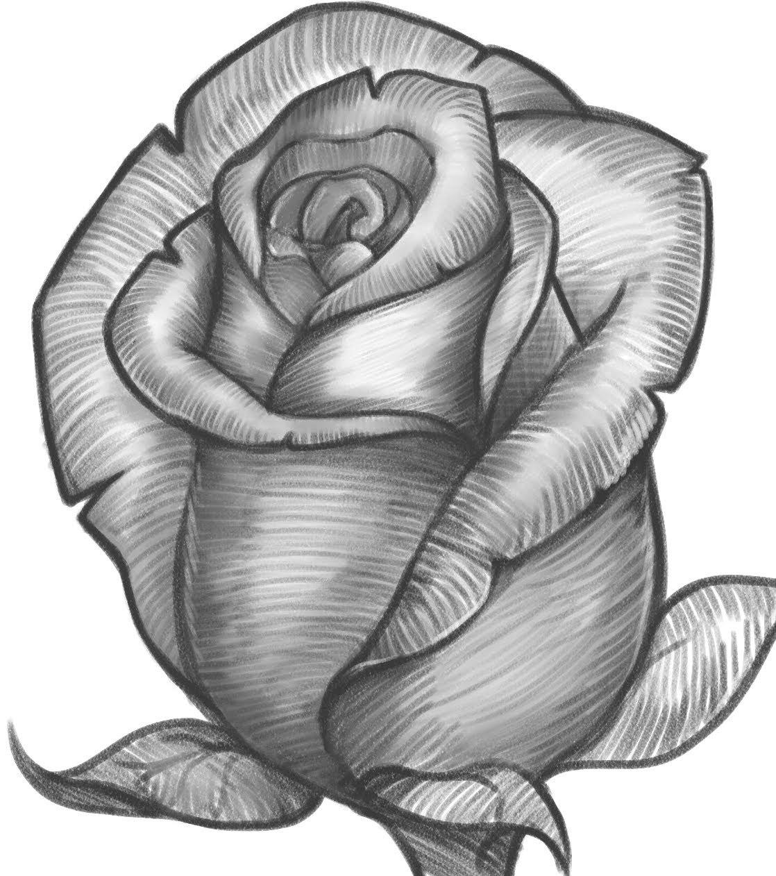 صورة تعلم الرسم الورود 12345 1