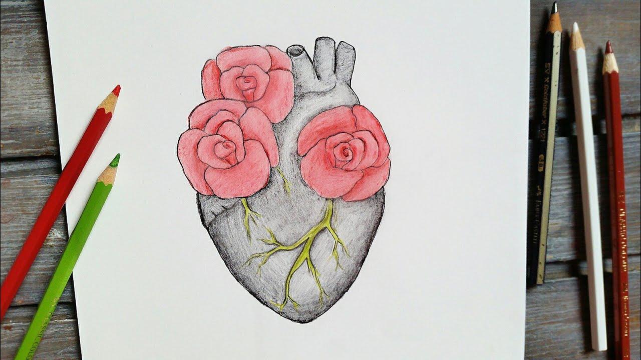 صورة تعلم الرسم الورود 12345 6